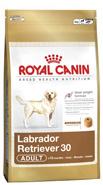 Conseils et alimentation du labrador